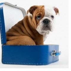 dog-public-domain-300x268.jpg