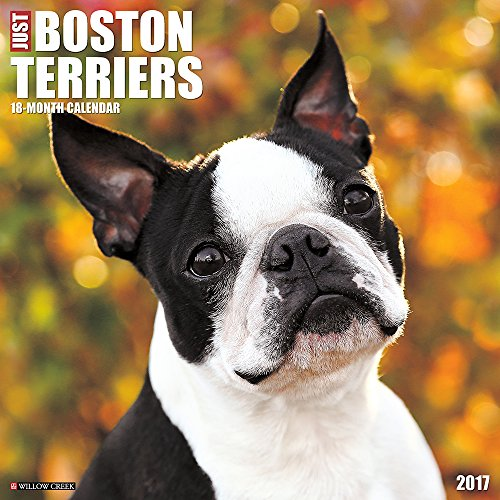 Madison's Mission's Challenge is to help Boston Terriers - Rochester Democrat and Chronicle (blog)
