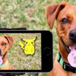 10 Tips for Better Pet Instagram Photos