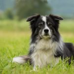 Dog Boarding Tips