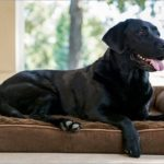 5 Benefits of Buying a Bed for Your Dog