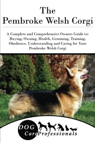 Cardigan Welsh Corgi Facts And Information