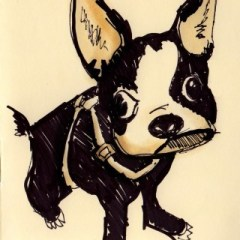 boston-terrier20103.jpg