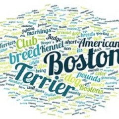 boston-terrier2075.jpg