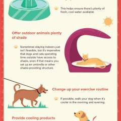 pet-safe-summer-heat