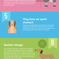 10 Reasons Dog Won't Eat
