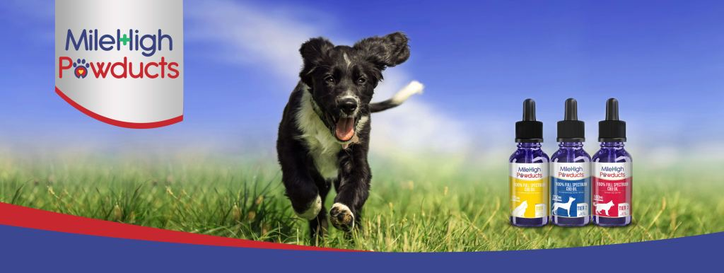CBD Dosage for Dogs - How Much is Too Much?