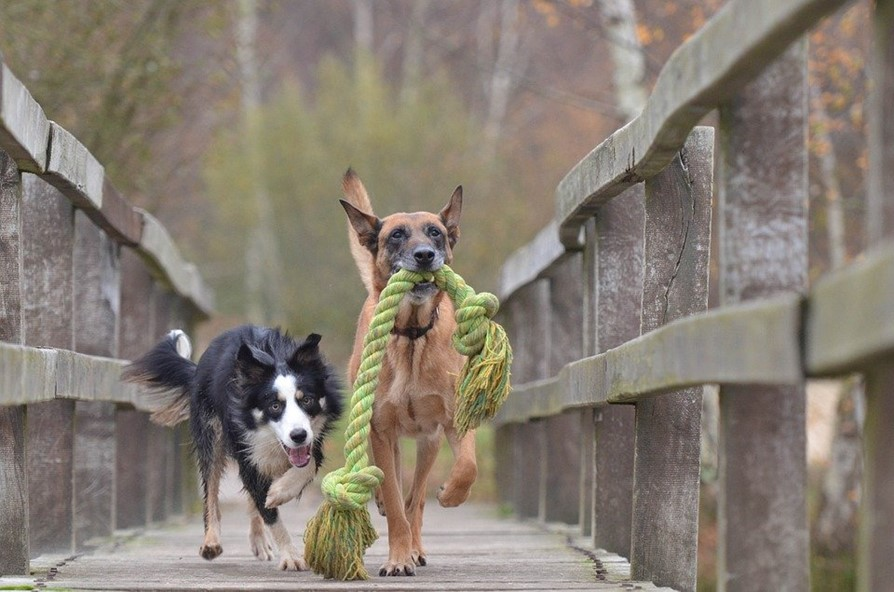 What are the right toys for your dog?