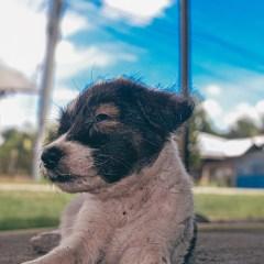 Stinky-dog