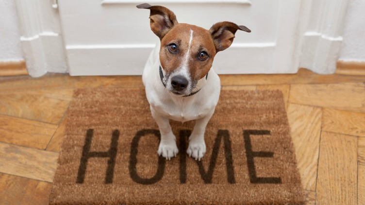 Tips for Moving House with Pets