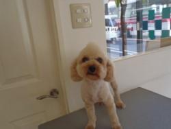 福岡県古賀市の犬の美容室ペットサロン ドッグマート
