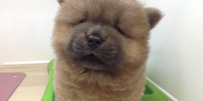 ♥おすすめ犬バトンタッチ♥