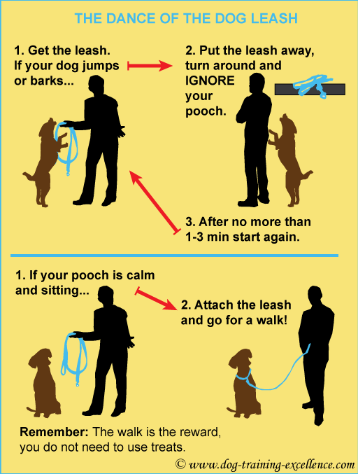 How to Train a Puppy to Walk on a Leash – 4 Puppy Leash Training Tips