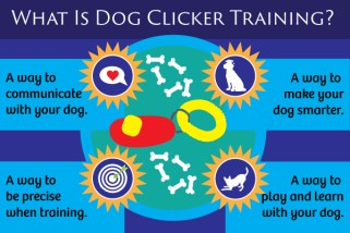 What is Dog Clicker Training?