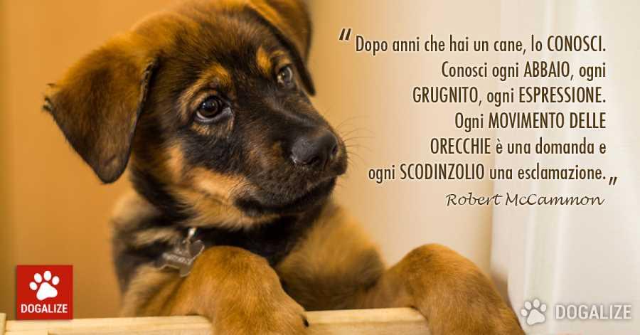 Frasi Cani Mccammon Una Vita Con Un Cane Dogalize
