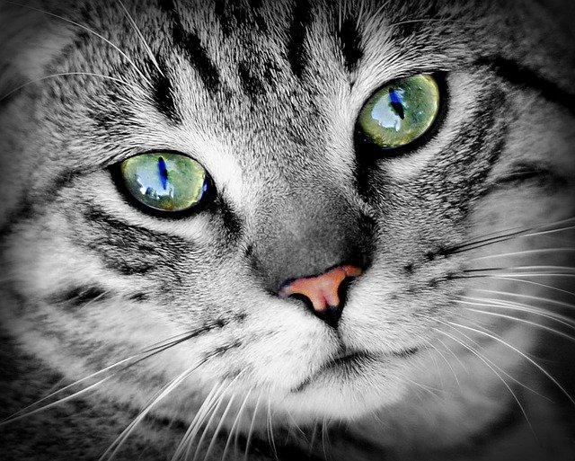 características sobre los gatos