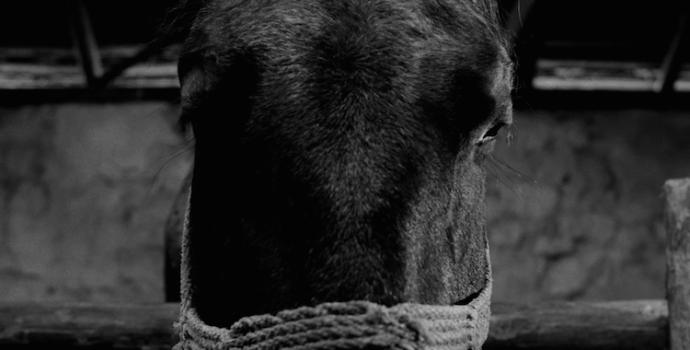 A Torinói ló