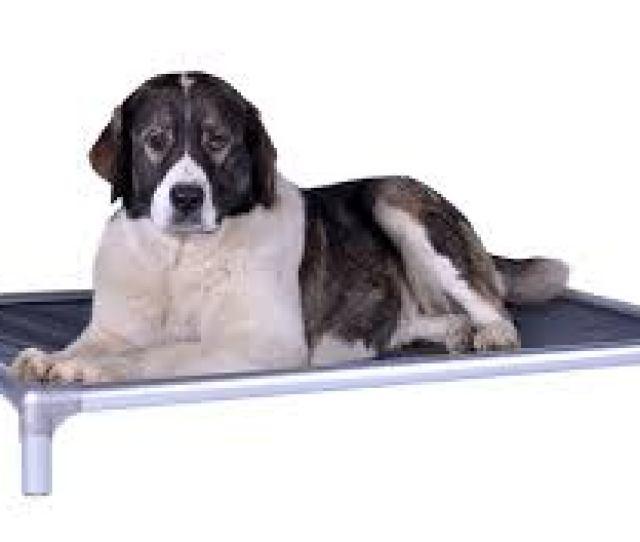 Kuranda Dog Bed Chew Proof All Aluminum Outdoor Review