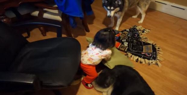 baby-falls-asleep-on-her-German-Shepherd