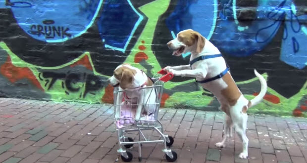 beagle dogs travel