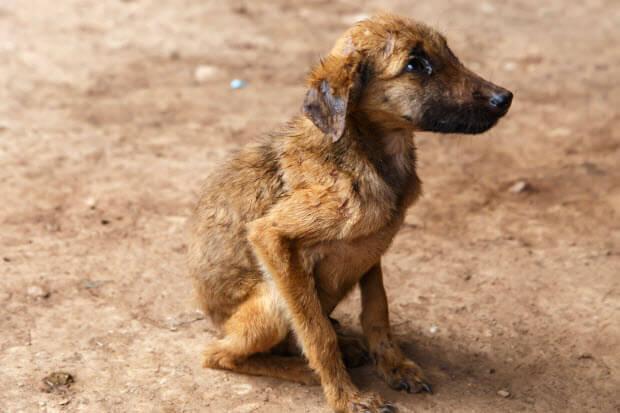 abandoned-dog