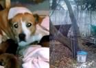 dog chained backyard