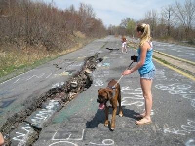 https://i1.wp.com/www.dogbreedinfo.com/images21/BrunoBoxerPuppy47WeeksCentralia1.jpg