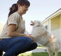 compare dog breeds