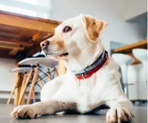 should you tip a dog groomer