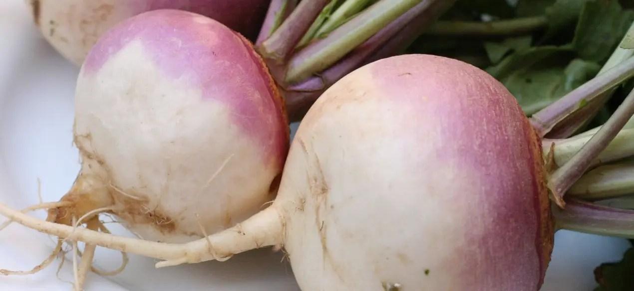 Should you give a dog turnips