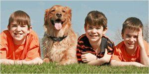 Benefits of Dog Bark Collar (Best Bark Collar Reviews)