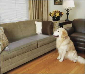 keep dog off couch
