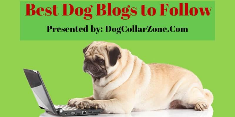 best dog blogs to follow 2016-17
