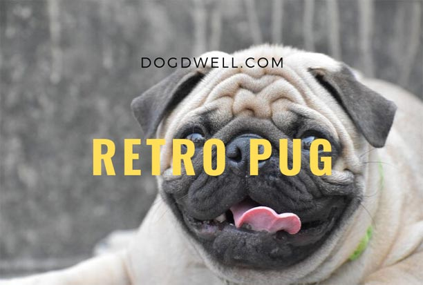 retro-Pug