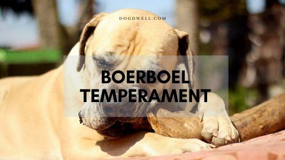 Boerboel Temperament