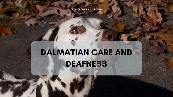 Dalmatian Deafness Care