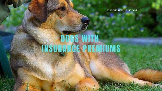 dog insurance premiums