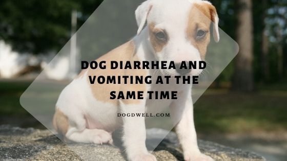 dog diarrhea and vomiting at the same time