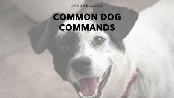Common Dog Commands