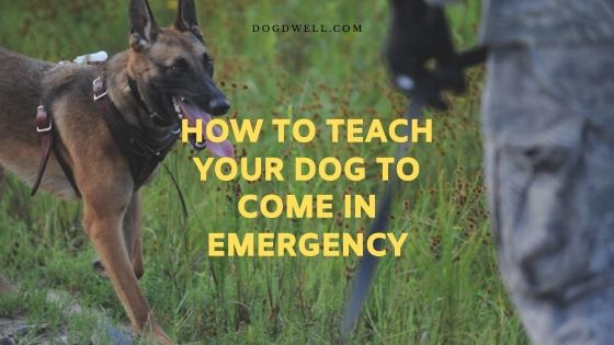how to teach your dog to come