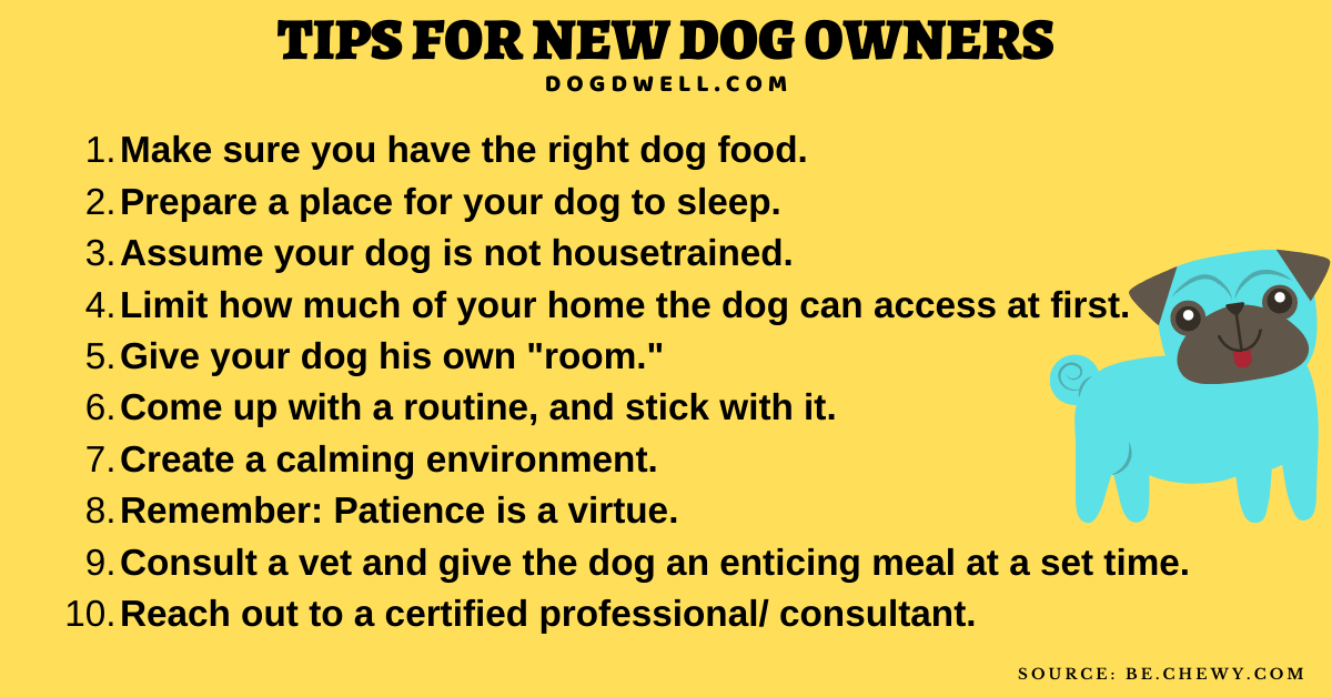 dog owner tips first time dog owner tips tips for new dog owners tips for new puppy owners first time puppy owner tips cockapoo training tips for first time owners advice for first time dog owners advice for new puppy owners advice for new dog owners things to know for first time dog owners tips for husky owners best advice for new puppy owners puppy advice for new owners first dog owner tips husky owner tips best tips for new puppy owners tips for puppy owners tips for german shepherd owners tips for pitbull owners first time pet owner dog tips shih tzu advice for new owners tips for rottweiler owners dog tips for new owners top tips for new puppy owners tips for shih tzu owners tips for getting a dog for the first time advice for first time puppy owners first time husky owner tips advice for puppy owners things to know for first time puppy owners tips for golden retriever owners