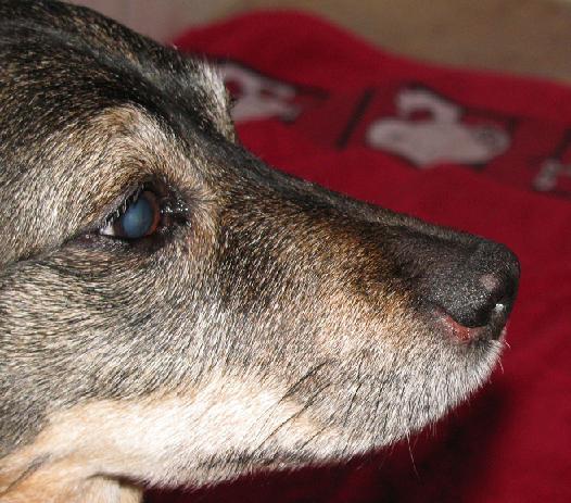 Wunde Nase O Gesundheit Dogforumde Das Große Hundeforum