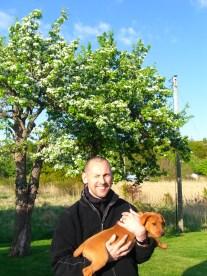 Päronträden blommar för fullt