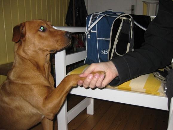 Här över jag med husse Jocke, att han skall hålla fram sin hand samtidigt som han ger mig en godis. Husse har börjat lära sig!