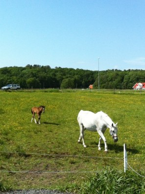 Här kommer mammahästen med sin hästvalp.