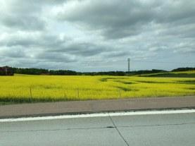 På väg mot Helsingborg, Annelunds Gård och då kennel House of Game.