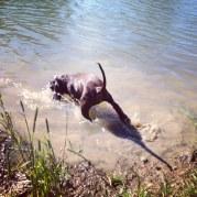 Hobby passade på att svalka sig i dammen.