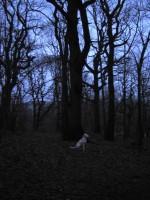 Hugo i mörk skog