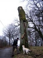 Jocke och Hugo hittade ett annat lika färskt träd