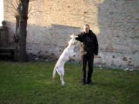 Hugo hoppar högt